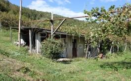 PALINI-IMMOBILIARE-VENDE-VIGNETO-59000-1